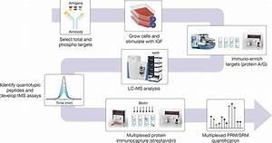 Quantitative Analysis Of The Akt  Mtor Pathway Using