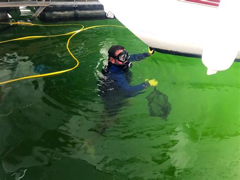 mussel man lake travis zebra mussel removal