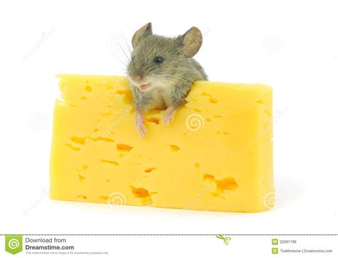 mouse on cheese vector cartoondealer 19125907