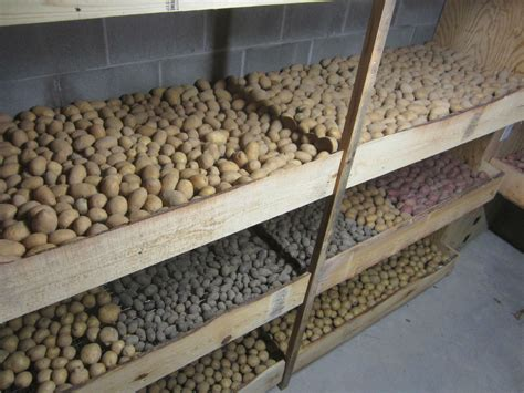 chambre froide solaire potatoes are among the most popular foods to be stored in