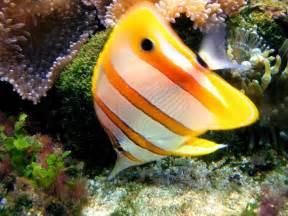 Orange Ocean Fish