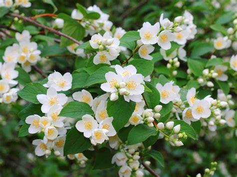 Choosing The Best Lowmaintenance Shrubs For Your Garden