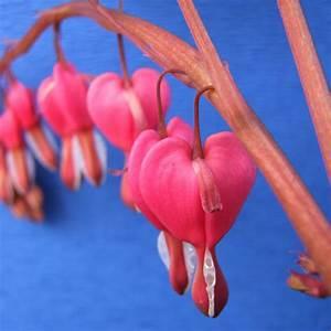 Quoi Planter En Automne : aromates fruitiers quoi planter en mars ooreka ~ Melissatoandfro.com Idées de Décoration