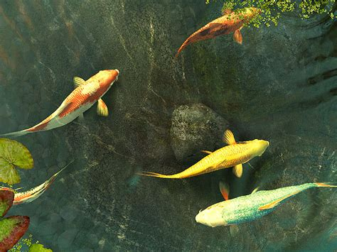 Animated Koi Fish Wallpaper - koi fish 3d screensaver and animated wallpaper