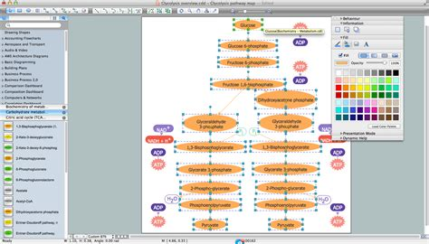 biology drawing software