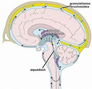 vocht in de hersenen