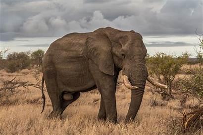 Elephant Africa Unsplash Animal Animals Mating Kinky