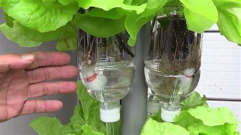 aquaponics hydroponic diy
