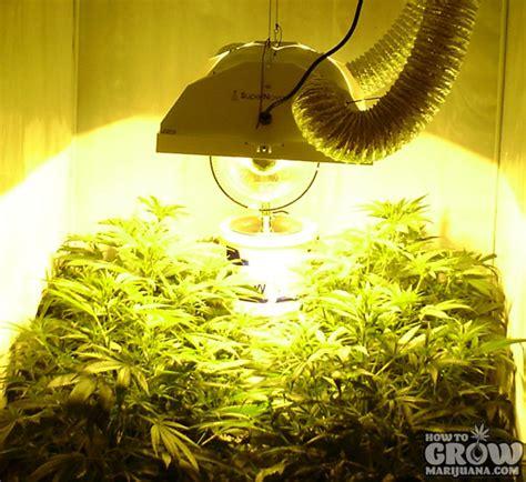 marijuana grow lights marijuana grow lights led hps cfl