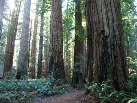 Jedediah Smith Redwoods Leor Pantilats Adventures