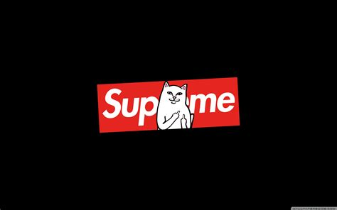 Supreme Cat 4K HD Desktop Wallpaper for 4K Ultra HD TV