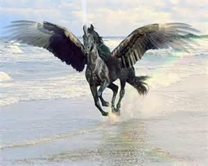 Black Pegasus Drawings