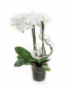 Orchideen Im Glas : orchidee im glas blumen bauchinger florist g rtner ~ A.2002-acura-tl-radio.info Haus und Dekorationen