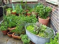 potted herb garden Potted herbs | Green Thumb | Pinterest