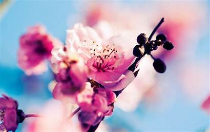 Spring Winter Wallpapers Ready Tired Google Flowers