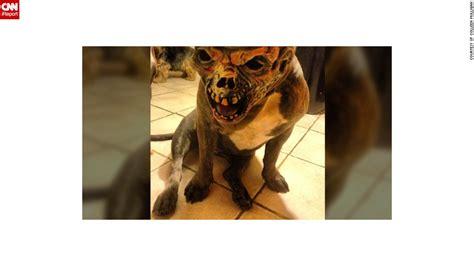 disfigured freaks hellish hounds  bloody babies cnn
