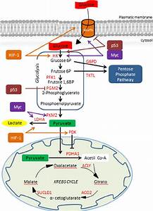 Anaerobic Metabolism Of The Bt