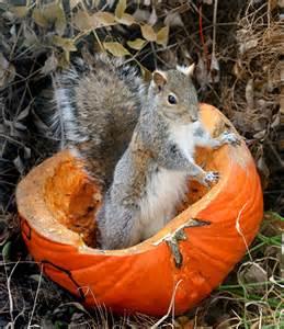 Cute Squirrel Halloween Costume