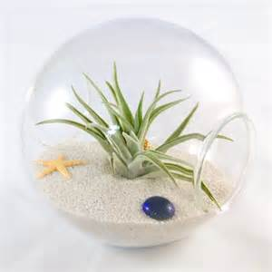 How To Start Nursery Plant Business by Air Plant Terrarium