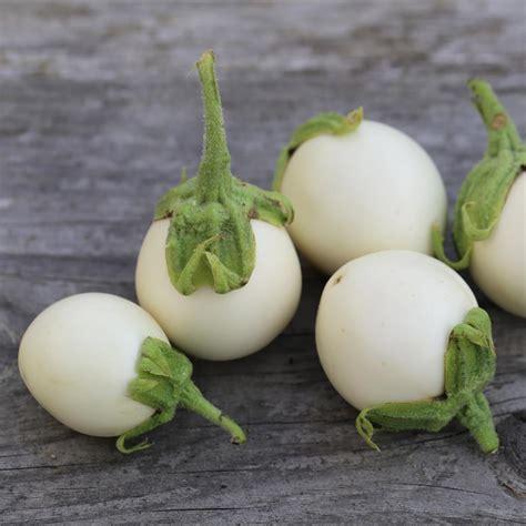 aubergine blanche ronde  oeufs ab ferme de sainte marthe
