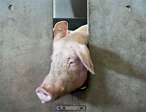 On The Pain Of Others  The Case For Animal Rights