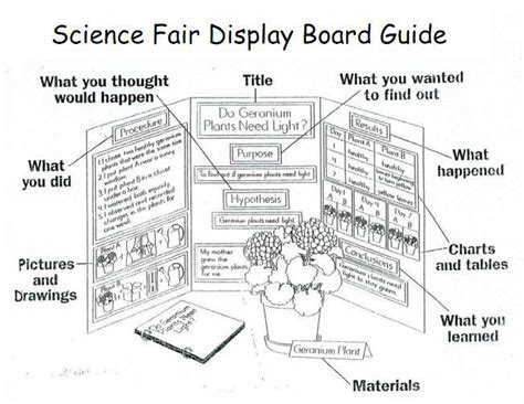 science fair board template will rogers two way immersion school of environmental science gt students gt bronco science