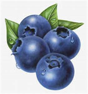 Blueberries Illustrations and Clip Art. 388 blueberries ...
