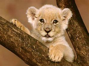Funny Animals Zone: Cute Baby Lions New Pictures