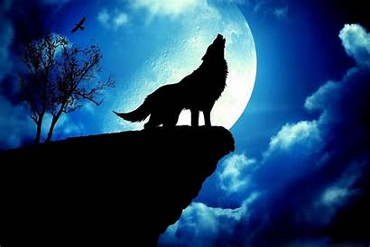 Moon Wolf Howling Background Wallpapers Cancer Dark