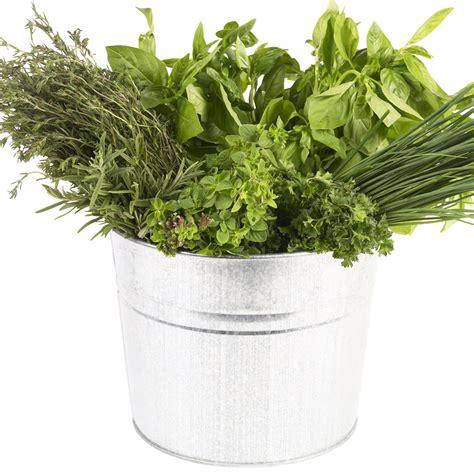 comment cuisiner du chou comment cuisiner les herbes aromatiques cuisine plurielles fr