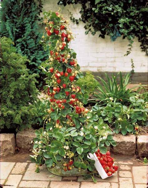 les fraisiers jardinerie la serre