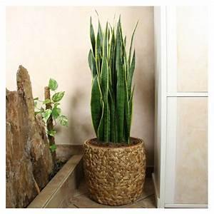 Pflanzen Wenig Licht : pflegeleichte zimmerpflanzen 18 vorschl ge ~ Markanthonyermac.com Haus und Dekorationen