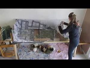 Cage A Cochon D Inde : nettoyage de la cage de mes cochons d 39 inde youtube ~ Dallasstarsshop.com Idées de Décoration
