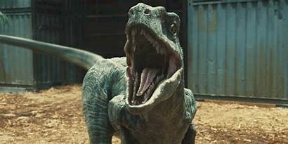 Jurassic Raptor Raptors Truth Dinos Animated Disappointing