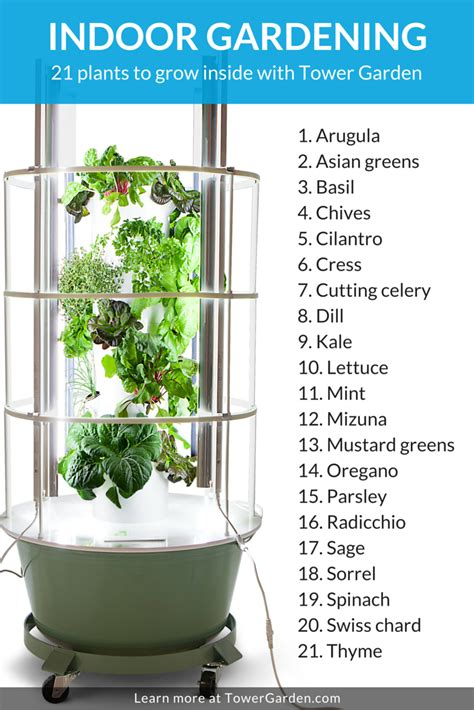 Grow Ls For Indoor Plants by When Something S Growing In The Kitchen Isn T A Bad Thing