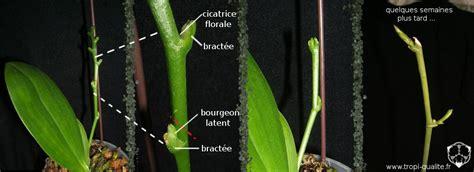 faire pousser une orchidee latelier des fleurs
