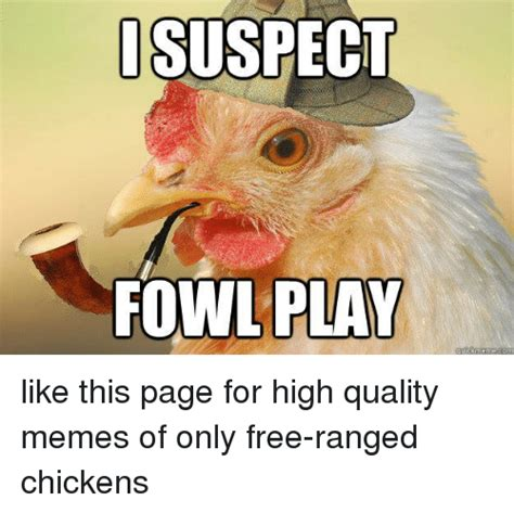 Quality Memes - i suspect fowl play ckmeme like this page for high quality memes of only free ranged chickens