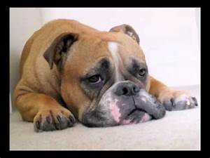 Funny Mother's Day Song (Bosco the Bulldog) - YouTube