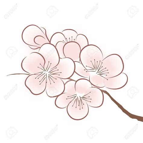 Cherry Blossom Flower Drawing  Flowers Ideas For Review