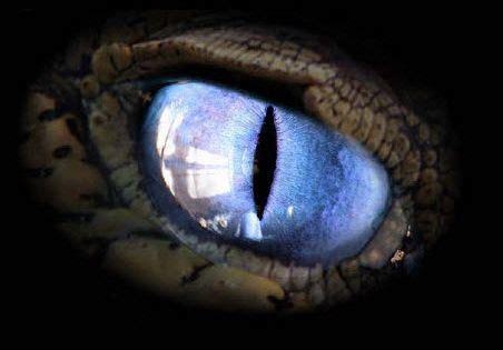 oeildudragonwsjpg oeil de dragon pinterest