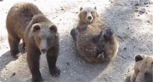Bear Wave GIFs - Find & Share on GIPHY