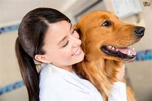 10 questions dog owners should ask vets