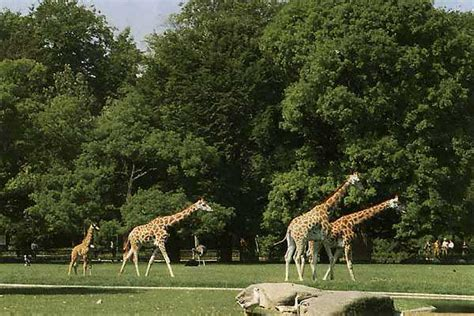 Botanischer Garten Augsburg Plan by Zoo Augsburg Tiergaerten De