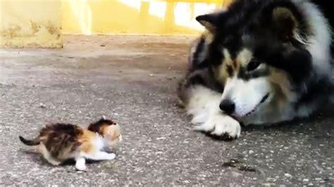 hund ist von babykatze mijau ziemlich verunsichert video