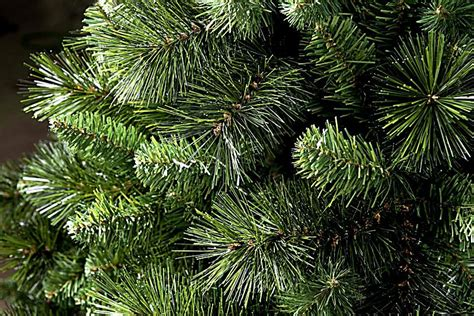 tannenbaum bestellen tannenbaum 180 cm jetzt bei weltbild at bestellen