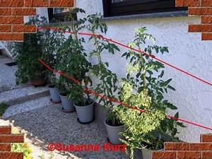 Tomaten Balkon Kübel : tomaten im k bel ~ Yasmunasinghe.com Haus und Dekorationen