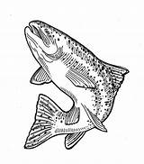 Trout Jumping Drawing Sketch Coloring sketch template