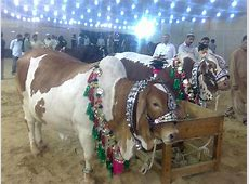 Bakra Eid eid ul azha latest HD Wallpapers Image Photos