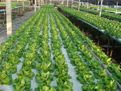 นวัตกรรมใหม่ของการปลูกพืช [Hydroponics]   Dek-D.com