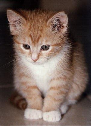 kehidupan artis foto gambar kucing